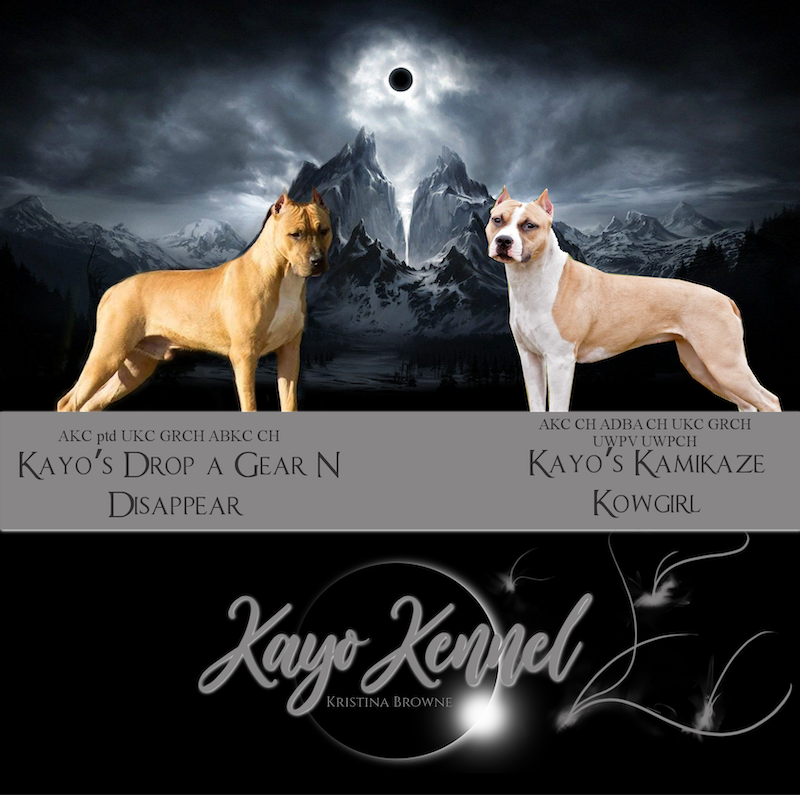 Kayo kennel breeding 2020
