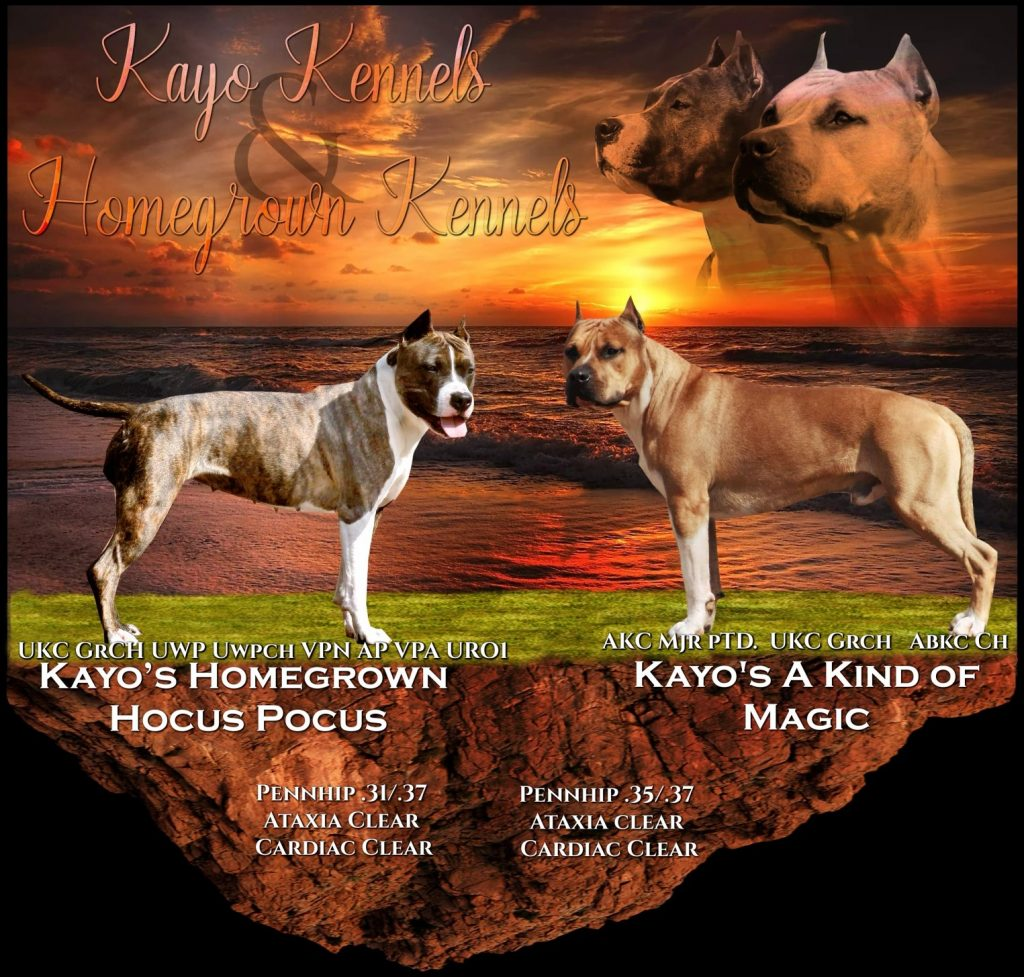 Kayo Kennel Breeding 2021